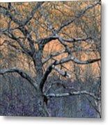 Bb's Tree 2 Metal Print