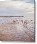 Beach Birds Metal Print