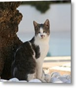Beach Cat Metal Print