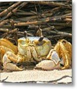 Beach Crab Metal Print