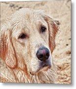 Beach Dog Metal Print