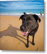 Beach Dog Metal Print
