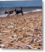 Beach Dogs Metal Print