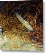 Beach Feather Metal Print