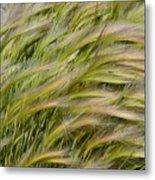 Beach Grasses Metal Print