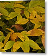 Beach Leaves Metal Print