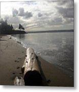 Beach Logs Metal Print