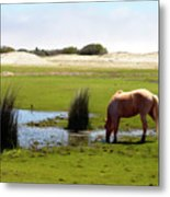 Beach Pony Metal Print