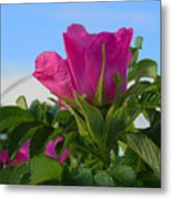 Beach Rose Metal Print