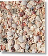 Beach Seashells Metal Print