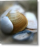 Beach Shells Metal Print