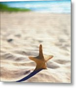 Beach Starfish Wood Texture Metal Print
