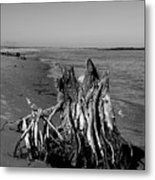 Beach Stump Metal Print
