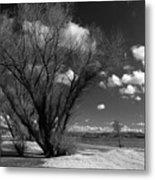 Beach Tree Metal Print