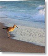 Beachcomer Metal Print