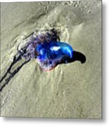 Beached Jellyfish 001 Metal Print