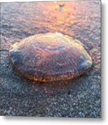 Beached Jellyfish Metal Print