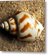 Beached Shell Metal Print