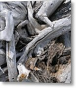 Beachwood Metal Print