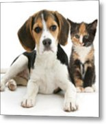 Beagle And Calico Cat Metal Print