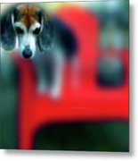 Beagle Beba Portrait Metal Print