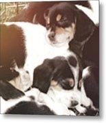Beagle Pile Metal Print