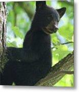 Bear Cub In Tree Metal Print