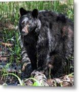 Bear Cub In Whistler Metal Print