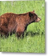 Bear Eating Daisies Metal Print