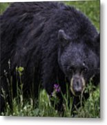 Bear Gaze Metal Print