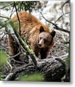 Bear In Trees Metal Print