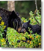 Bear Kisses Metal Print
