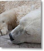 Bear Nap Metal Print