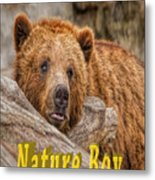 Bear Nature Boy Metal Print