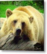 Bear On A Log Metal Print