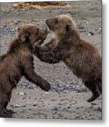 Bear Play Metal Print
