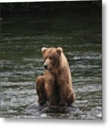 Bear Sitting On Water Metal Print by Tracey Hunnewell