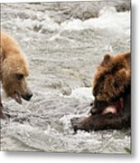 Bear Watches Another Eat Salmon In River Metal Print