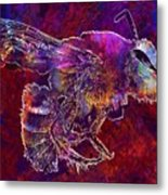 Bearded Bee Macro Insect Nature  Metal Print