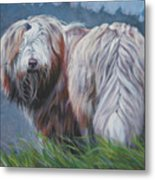 Bearded Collie In Field Metal Print
