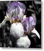Bearded Irises Partial Color Metal Print