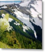 Beargrass Flower On The Slopes Of Mt. Hood Metal Print