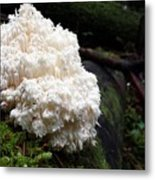 Bear's Head Tooth Of The Forest Metal Print