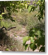 Beaten Path Metal Print