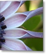 Beautiful 002 Metal Print