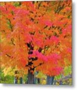 Beautiful Autumn Day Metal Print