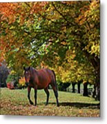 Beautiful Bay Horse In Fall Metal Print