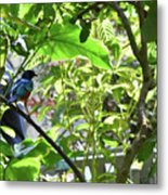 Beautiful Bird Perched In A Tree Metal Print