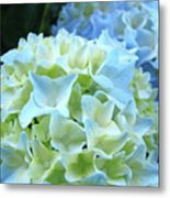 Beautiful Blue Hydrangea Floral Art Prints Creamy White Pastel Metal Print