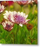 Beautiful Boquet Metal Print
